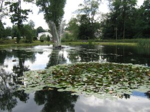 Park Froschgrün